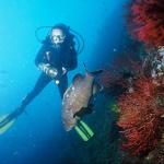 Il cioccolato fondente, un elisir di sicurezza per tutti i subacquei