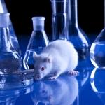 Research4life: la vivisezione è vietata, non parliamone più. Ma non possiamo fare a meno della sperimentazione sugli animali