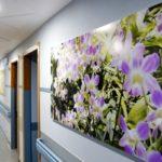 Luce e Colore per un nuovo rapporto tra ospedale e paziente